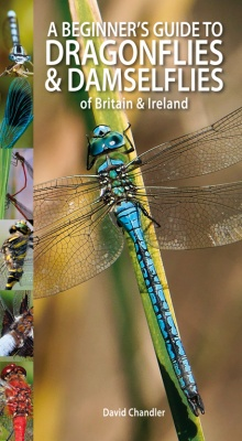A Beginner's Guide to Dragonflies & Damselflies of Britain & Ireland