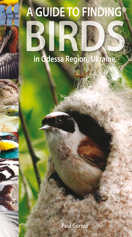 Guide to Finding Birds in Odessa Region, Ukraine