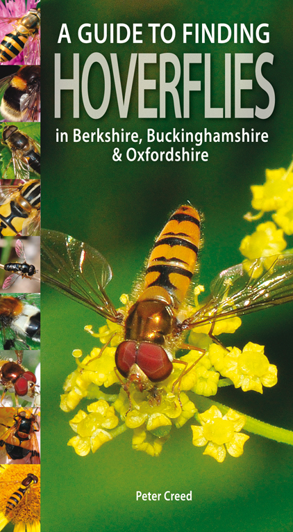 Guide to Finding Hoverflies in Berks, Bucks and Oxon