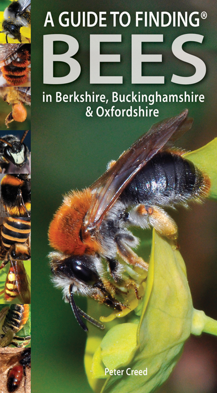 Guide to Finding Bees in Berks, Bucks and Oxon