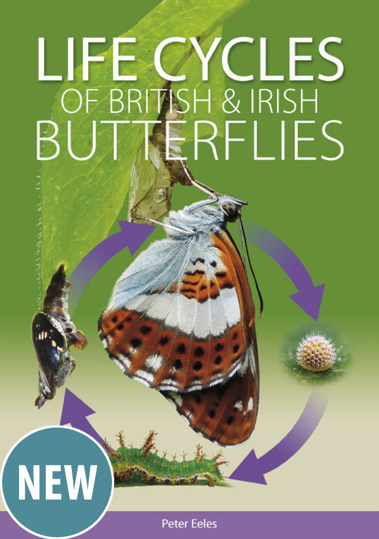 Life cycles of British and Irish Butterflies